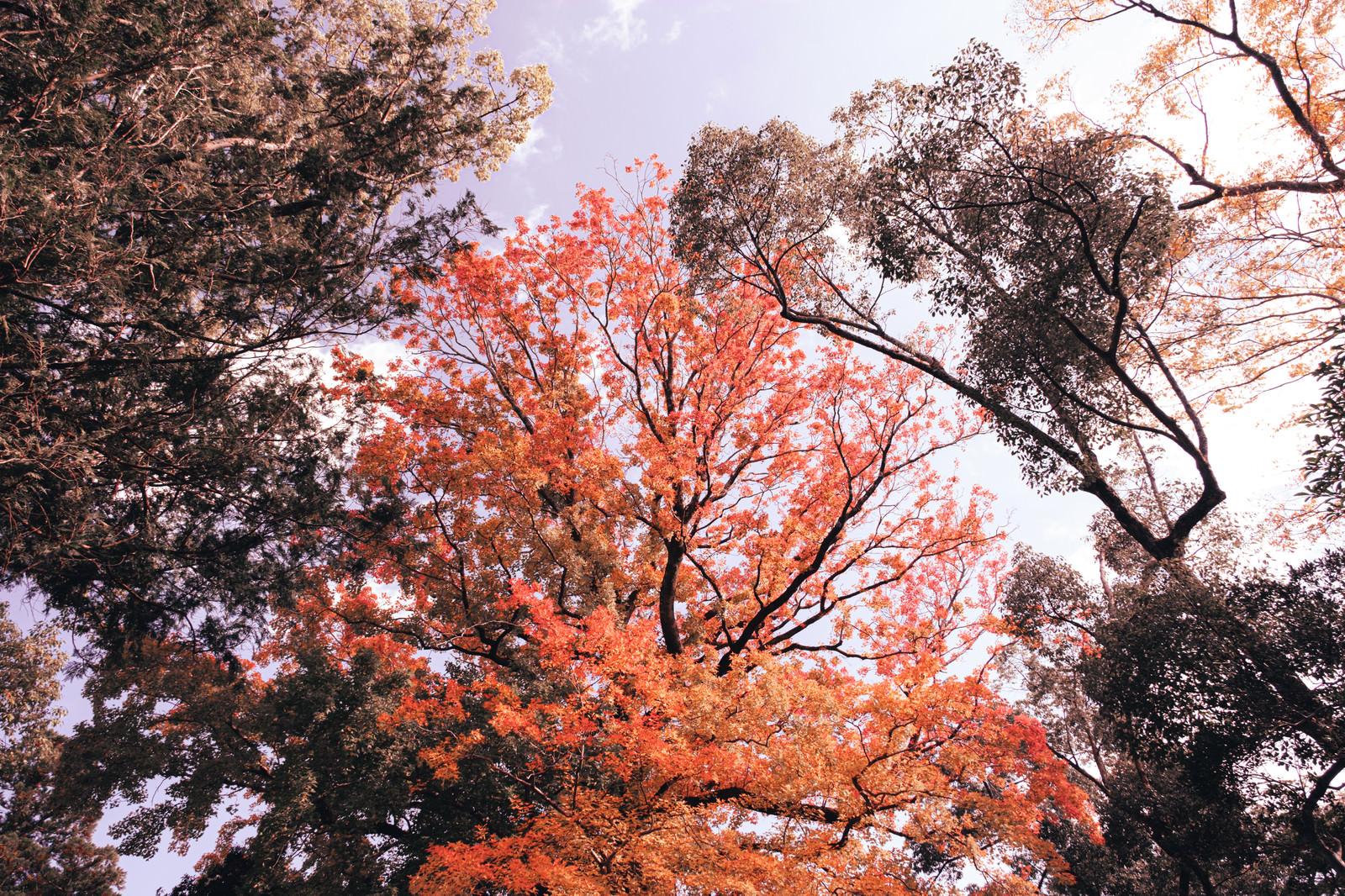 「色付き始めた木々」の写真