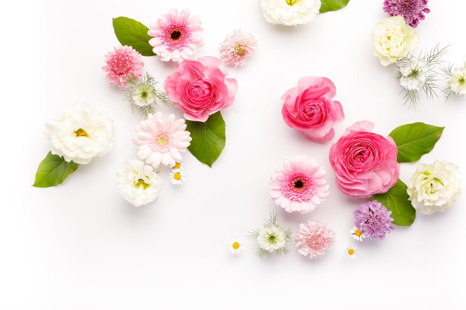 「お花のストックフォトお花のストックフォト」のフリー写真素材を拡大