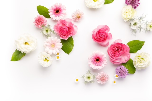 お花のストックフォトの写真