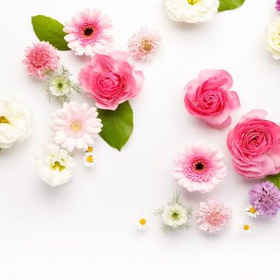 「お花のストックフォト」の写真素材