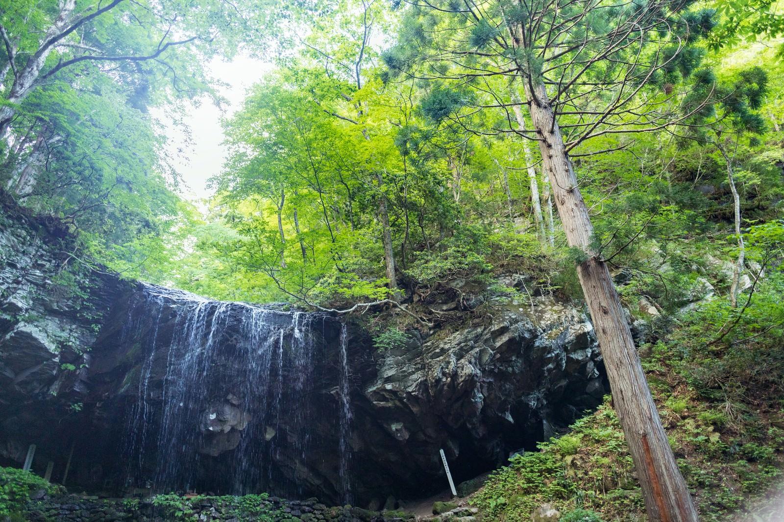 「岩井滝と6月中旬の緑」の写真