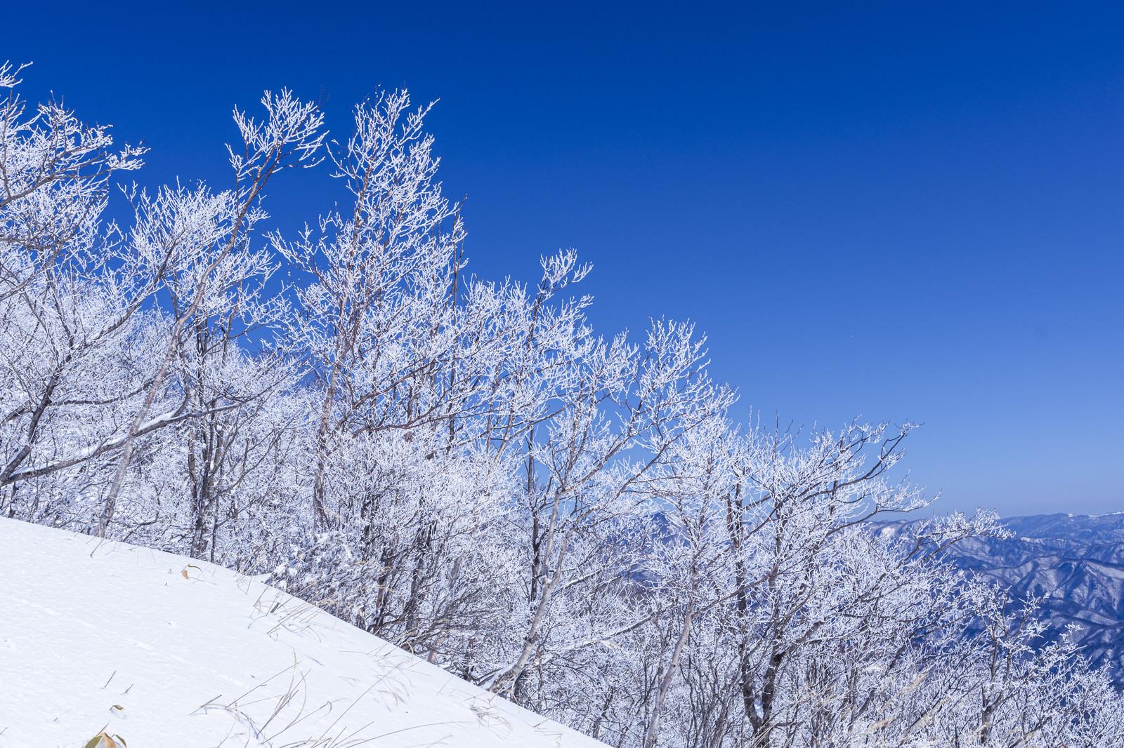 「霧氷の木々(赤城山)」の写真