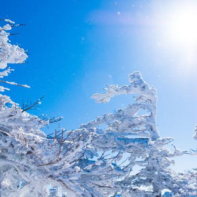 日差しが透けて煌めく雪と霧氷の写真