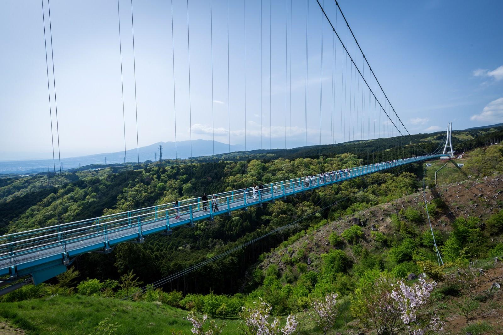 「三島スカイウォーク」の写真