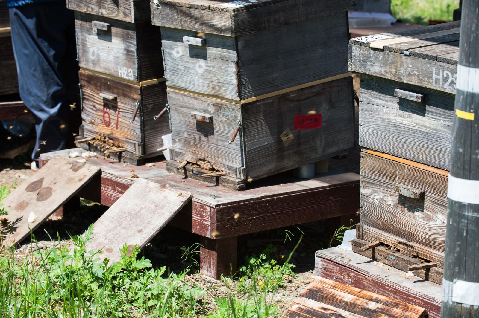 「傾斜角、方向、高さなど計算されたミツバチの巣箱」の写真