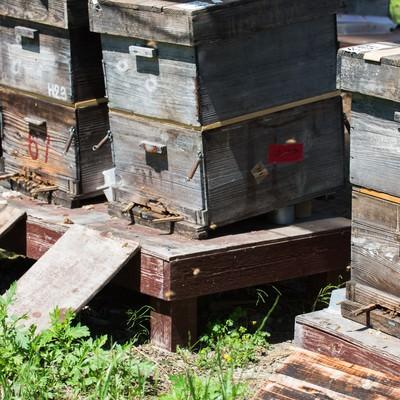 「傾斜角、方向、高さなど計算されたミツバチの巣箱」の写真素材