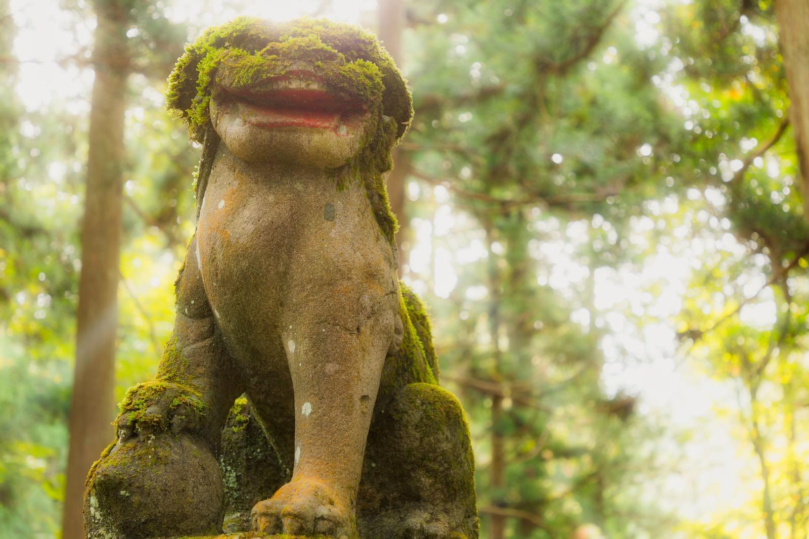 「苔の狛犬(金峰神社)」の写真