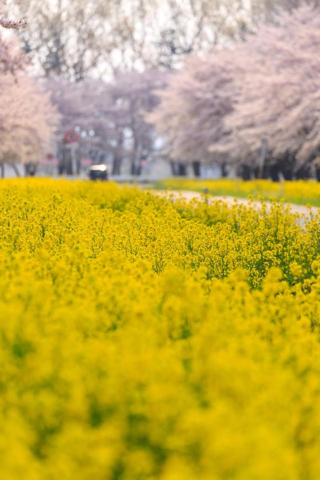 春に包まれるの写真