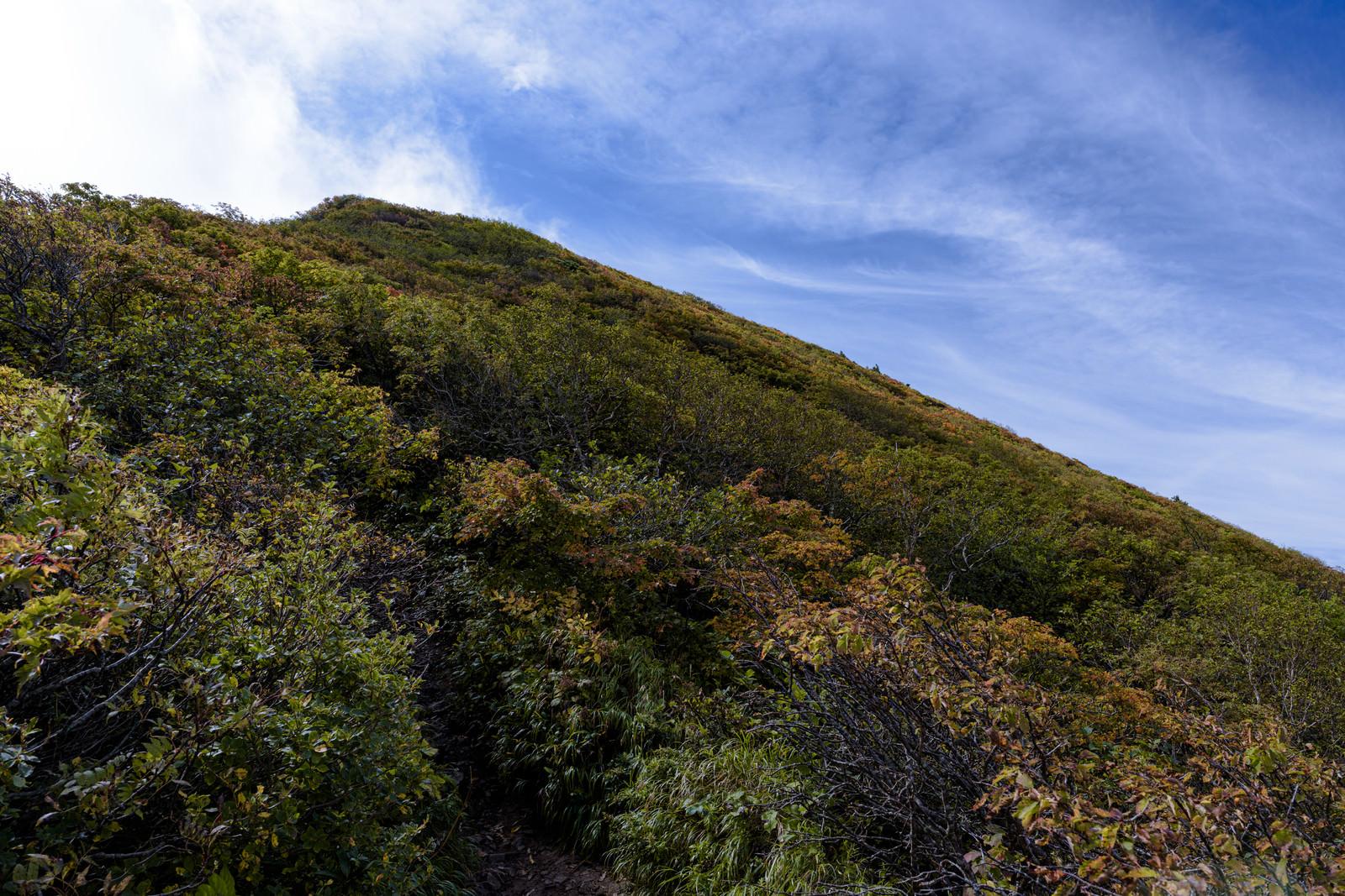 「紅葉した木々に覆われた磐梯山の山頂方面」の写真