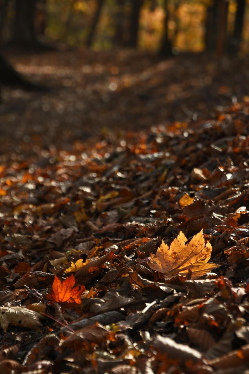 「落葉の続く道」の写真