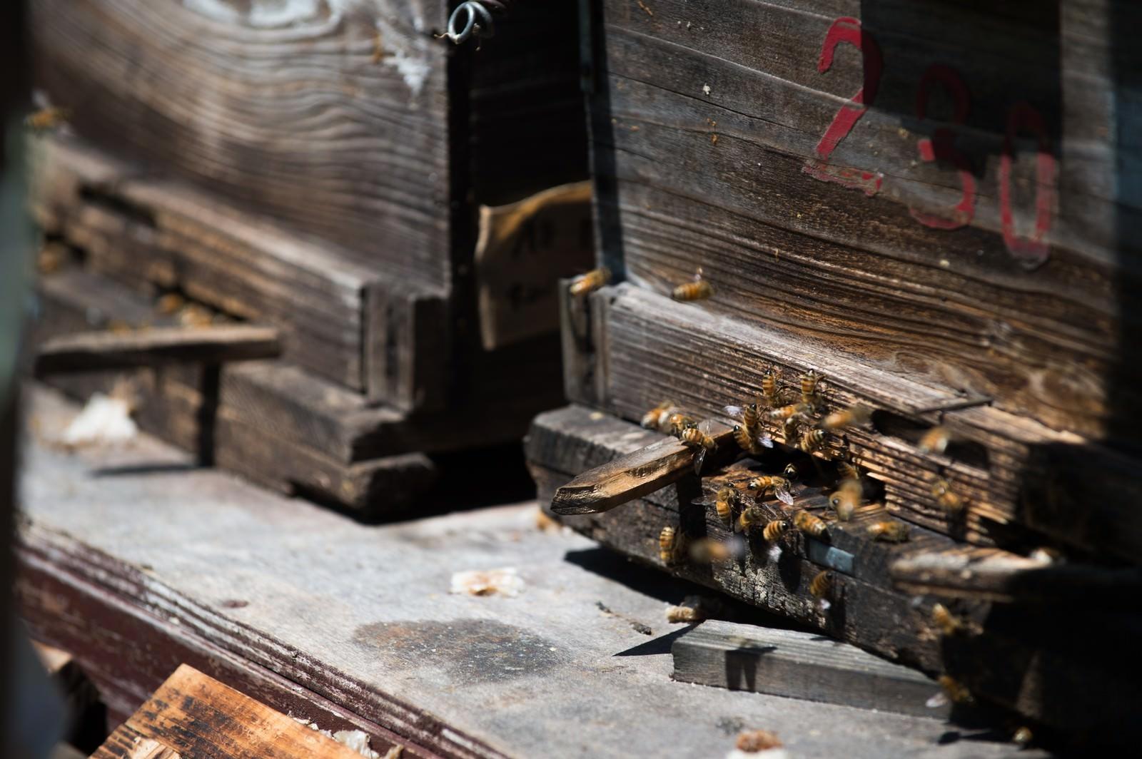 「巣箱の入り口とミツバチ」の写真