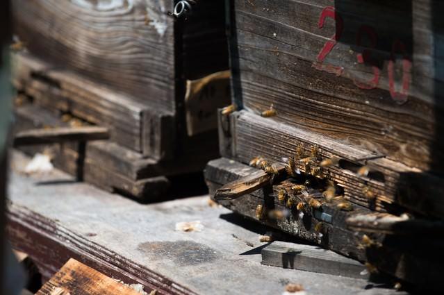 巣箱の入り口とミツバチの写真