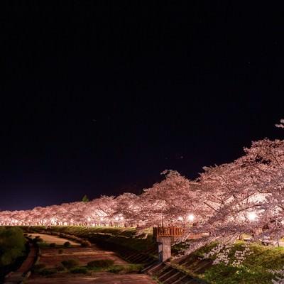 「角館桧木内川の夜桜(夜景)」の写真素材