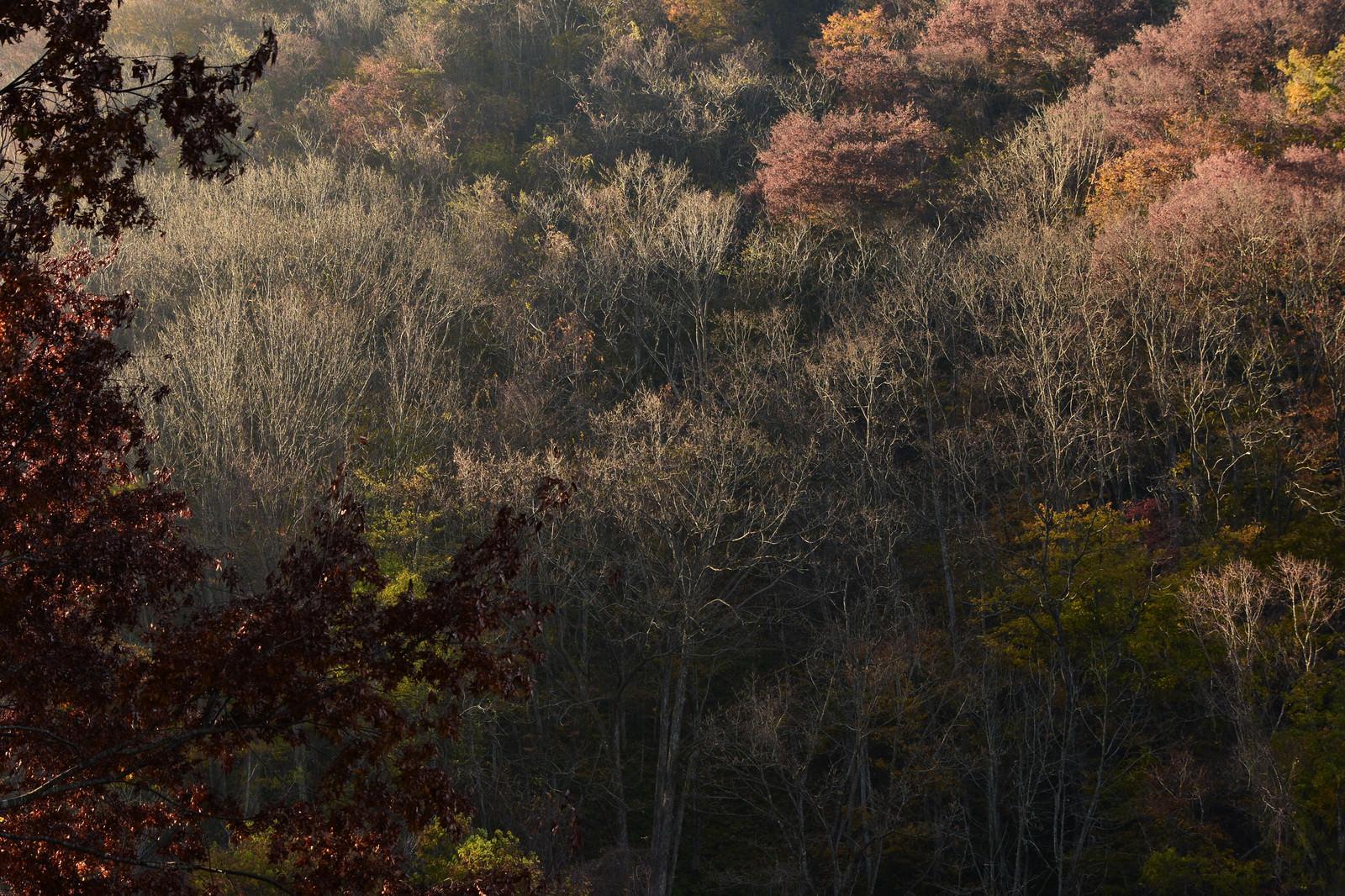 「朝日を浴びる冬枯れの木々」の写真