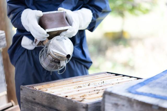 煙を嫌がり、巣の奥に移動するミツバチの写真