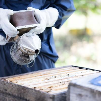 「煙を嫌がり、巣の奥に移動するミツバチ」の写真素材