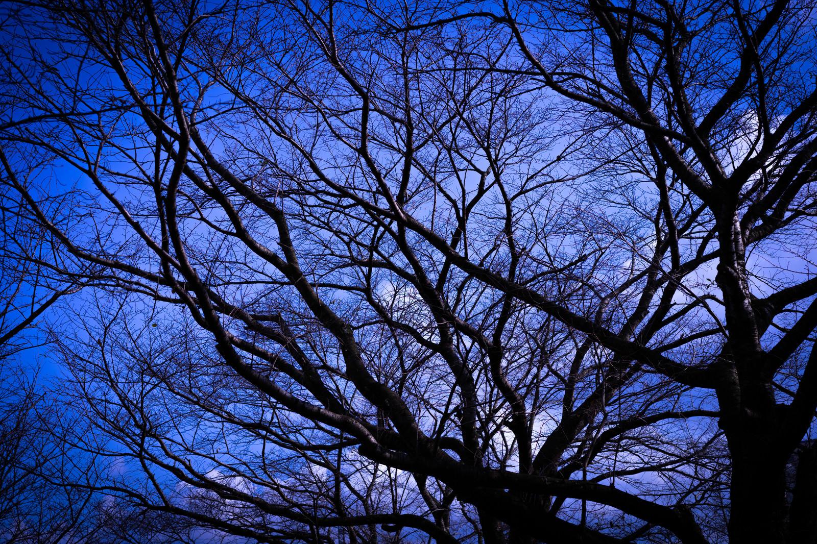 「張り巡る木々の枝」の写真