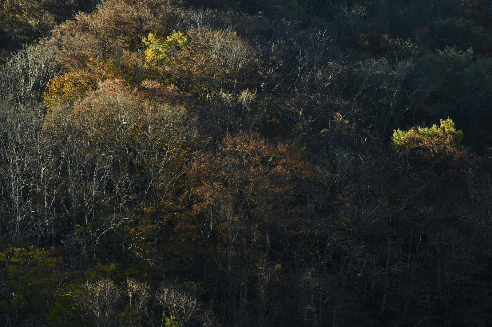 「晩秋の森の木々」の写真