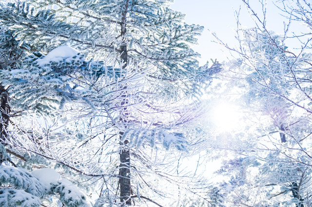 「霧氷の間から差し込む朝日」のフリー写真素材