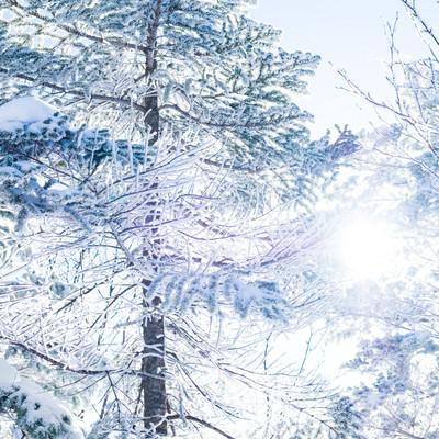 霧氷の間から差し込む朝日の写真