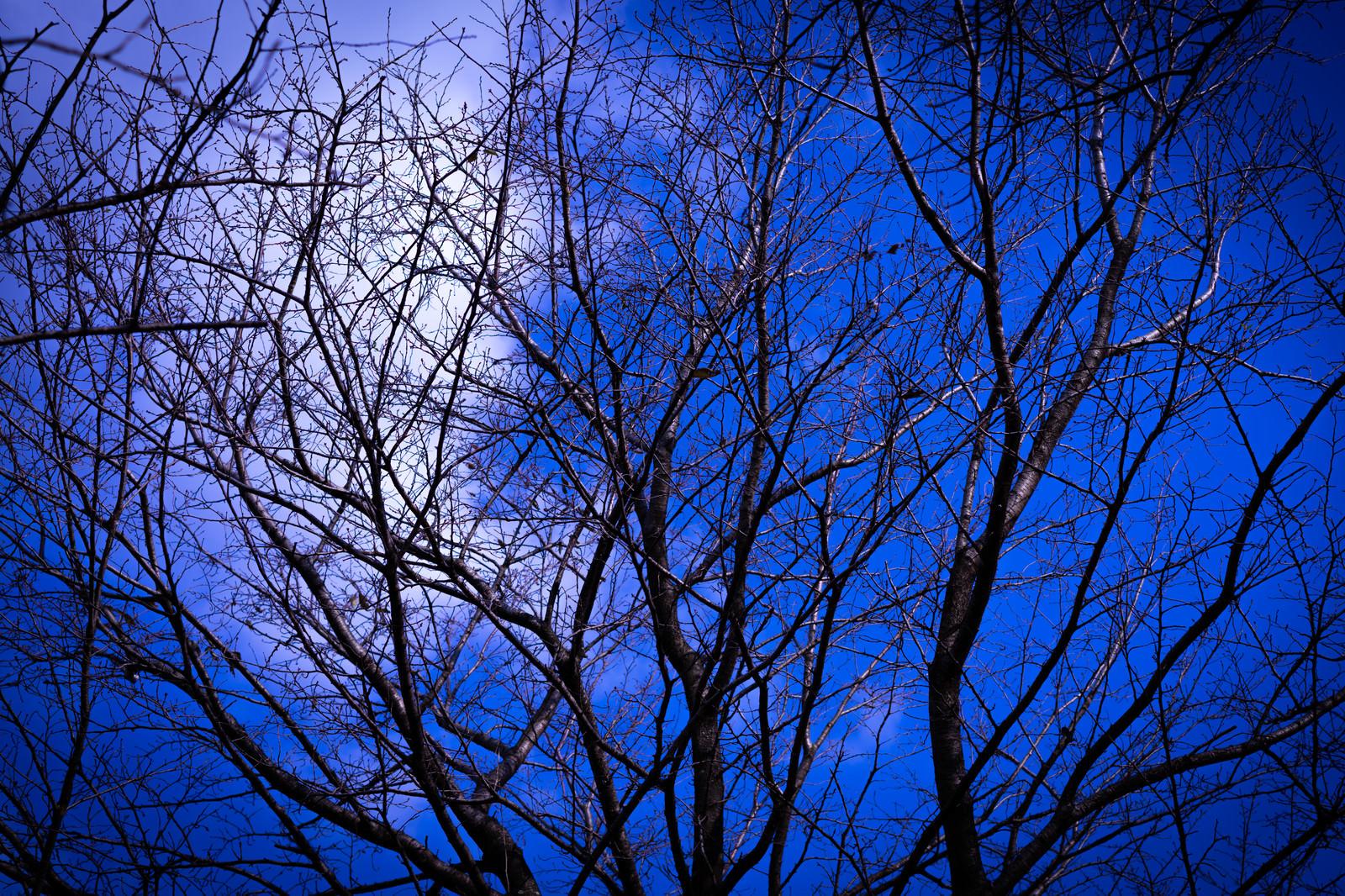 「木枯」の写真