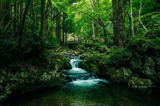 深い森と白賀渓谷(鏡野町)の写真