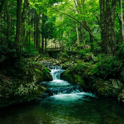 「深い森と白賀渓谷(鏡野町)」の写真素材