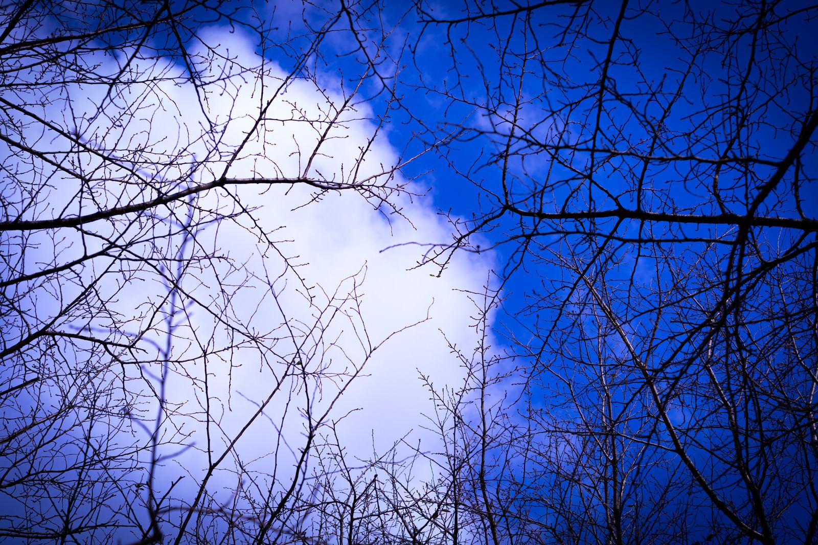「木々の隙間から見上げる空」の写真