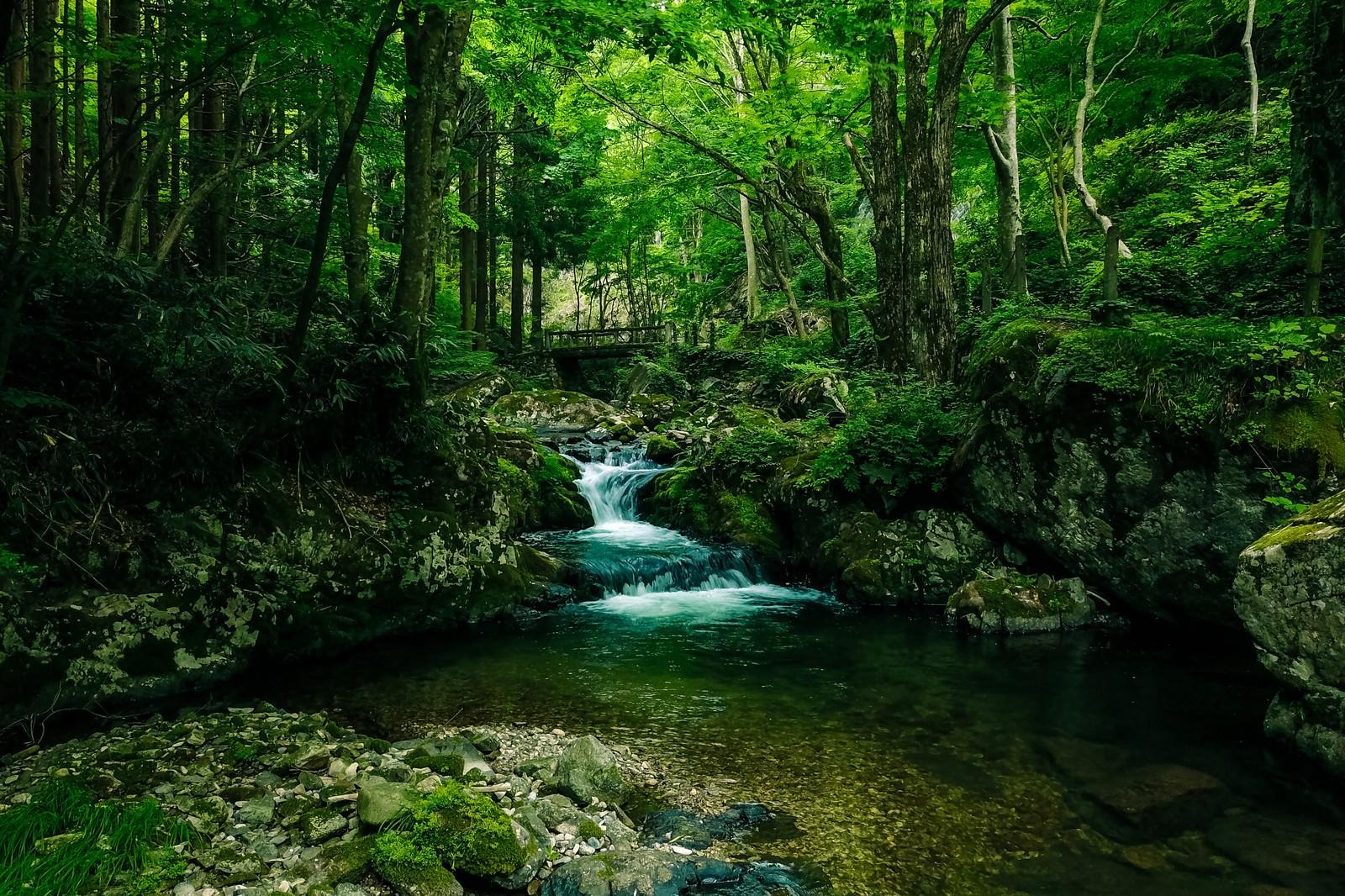 「緑に覆われた白賀渓谷(岡山県鏡野町)」の写真