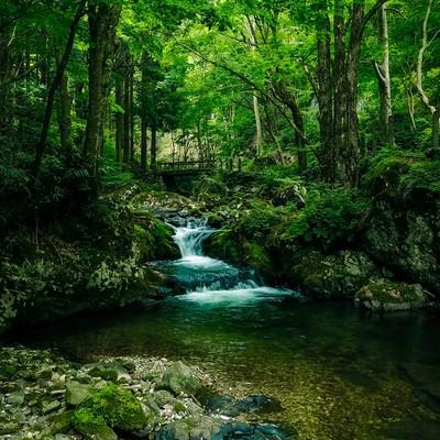 緑に覆われた白賀渓谷(岡山県鏡野町)の写真