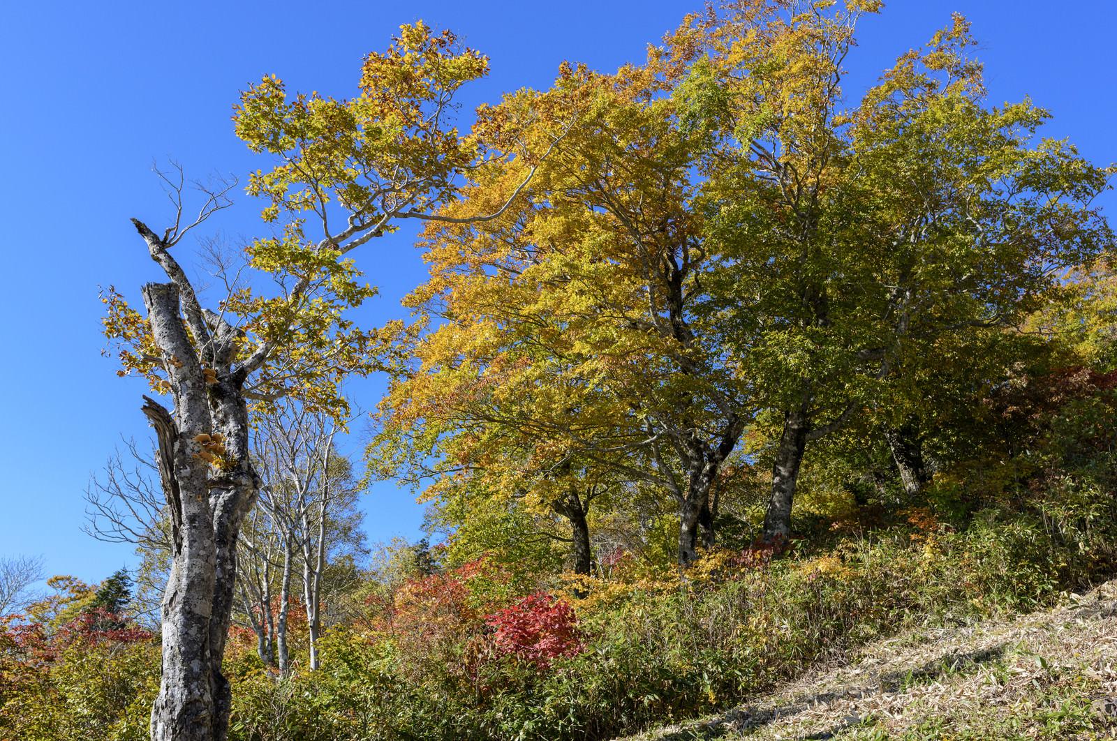 「デコ平の黄葉(西吾妻山)」の写真
