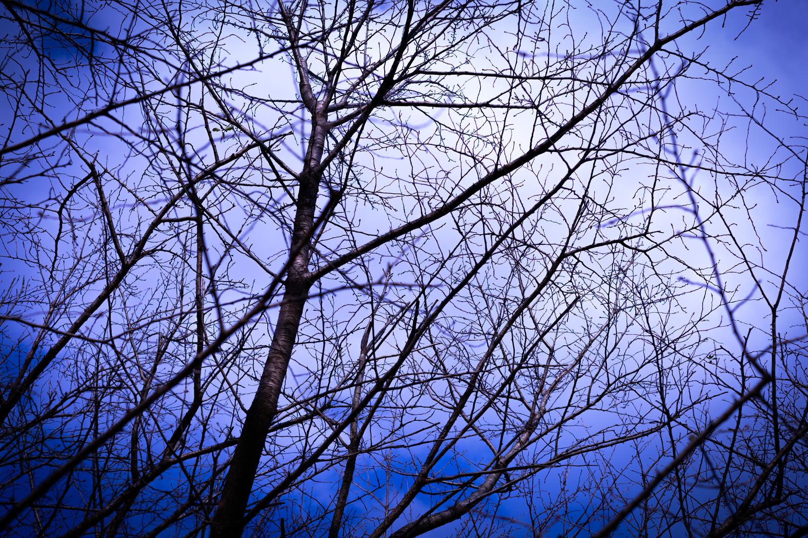 「不気味な空と木々」の写真