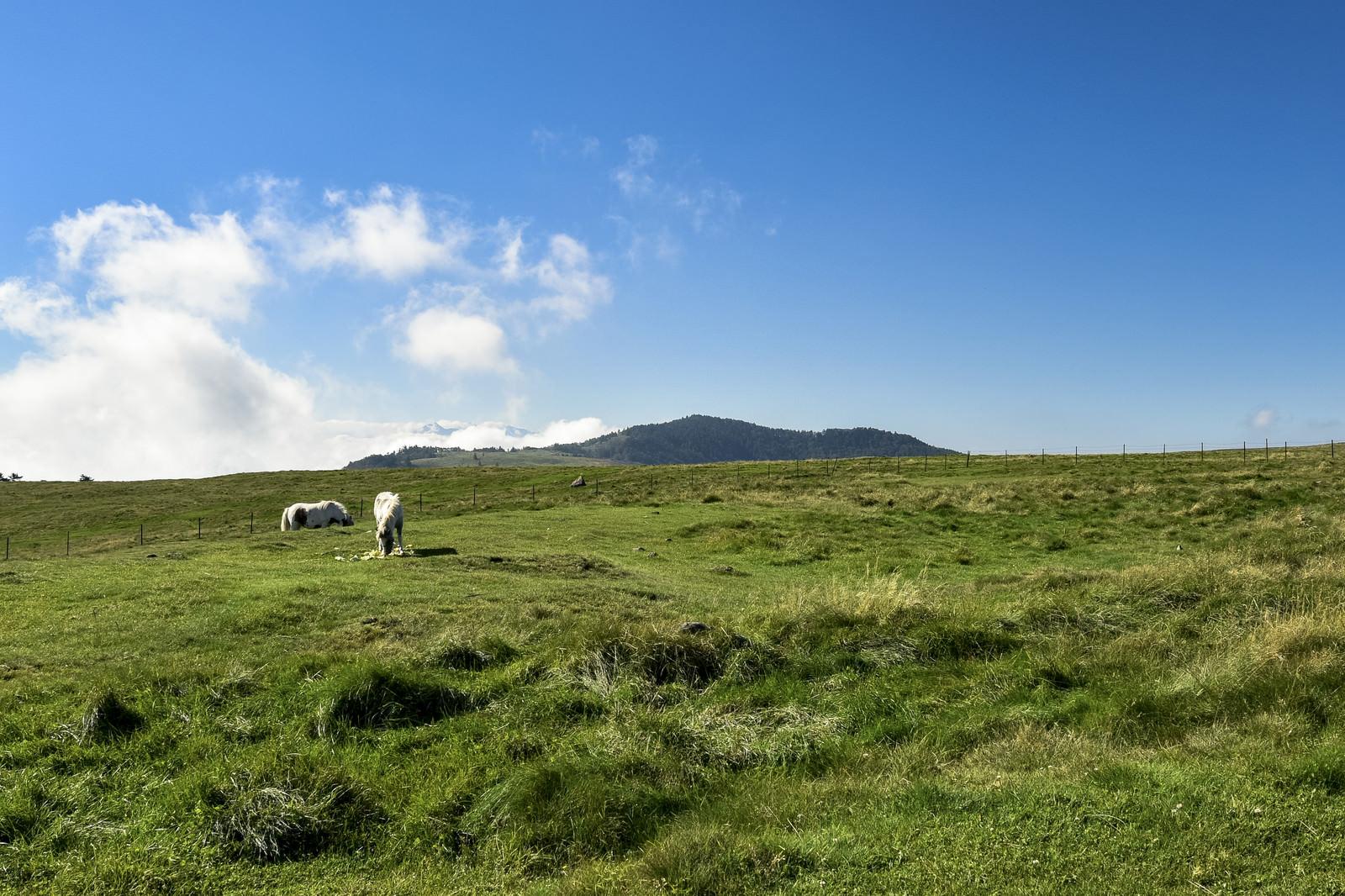 「美ヶ原に放牧された馬」の写真