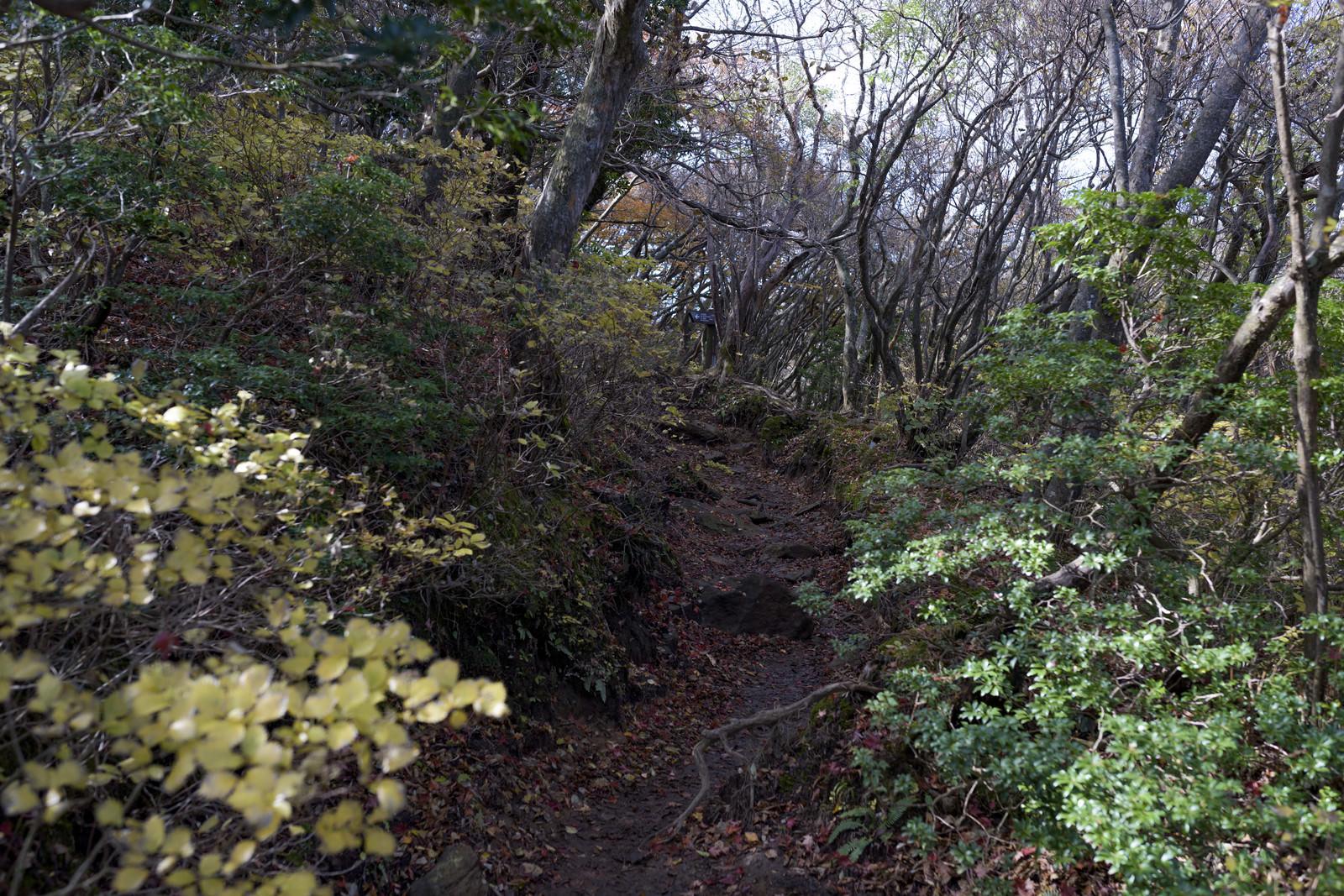 「低木が生い茂る天城山の登山道」の写真