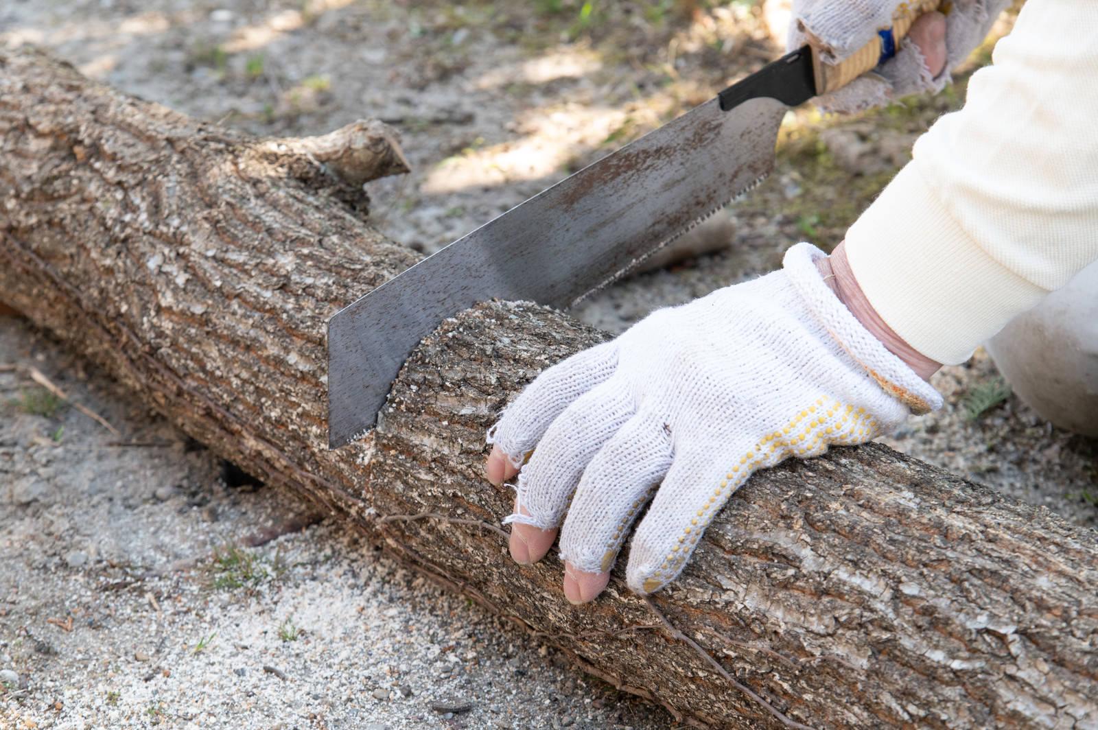 「しいたけの原木をのこぎりで切る」の写真