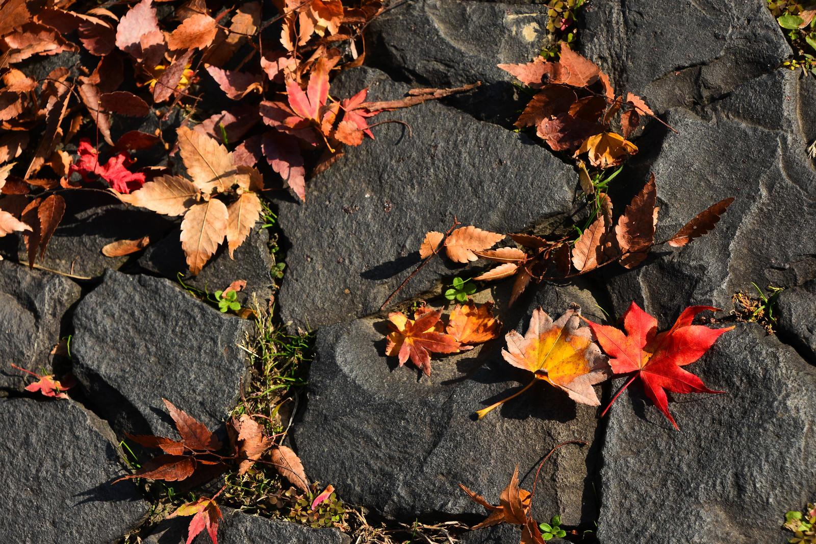 「石畳に落ちる枯葉」の写真