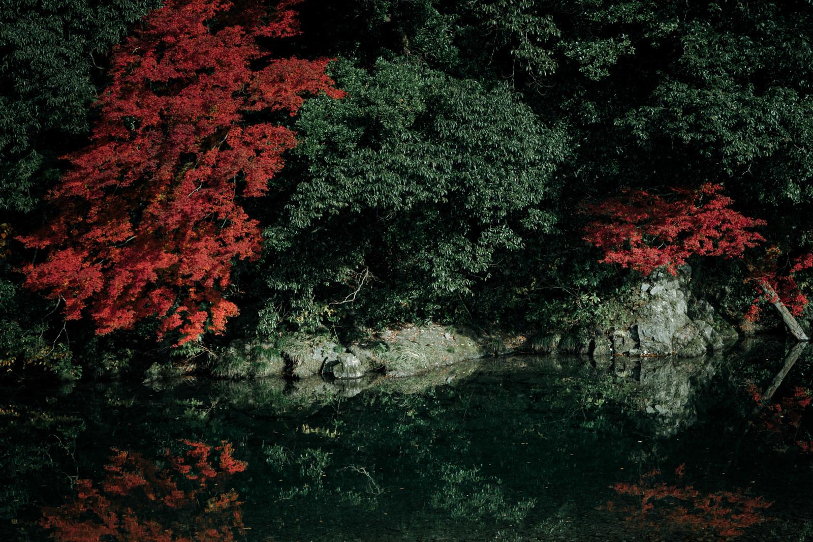 「湖面に映る紅葉したもみじ」の写真