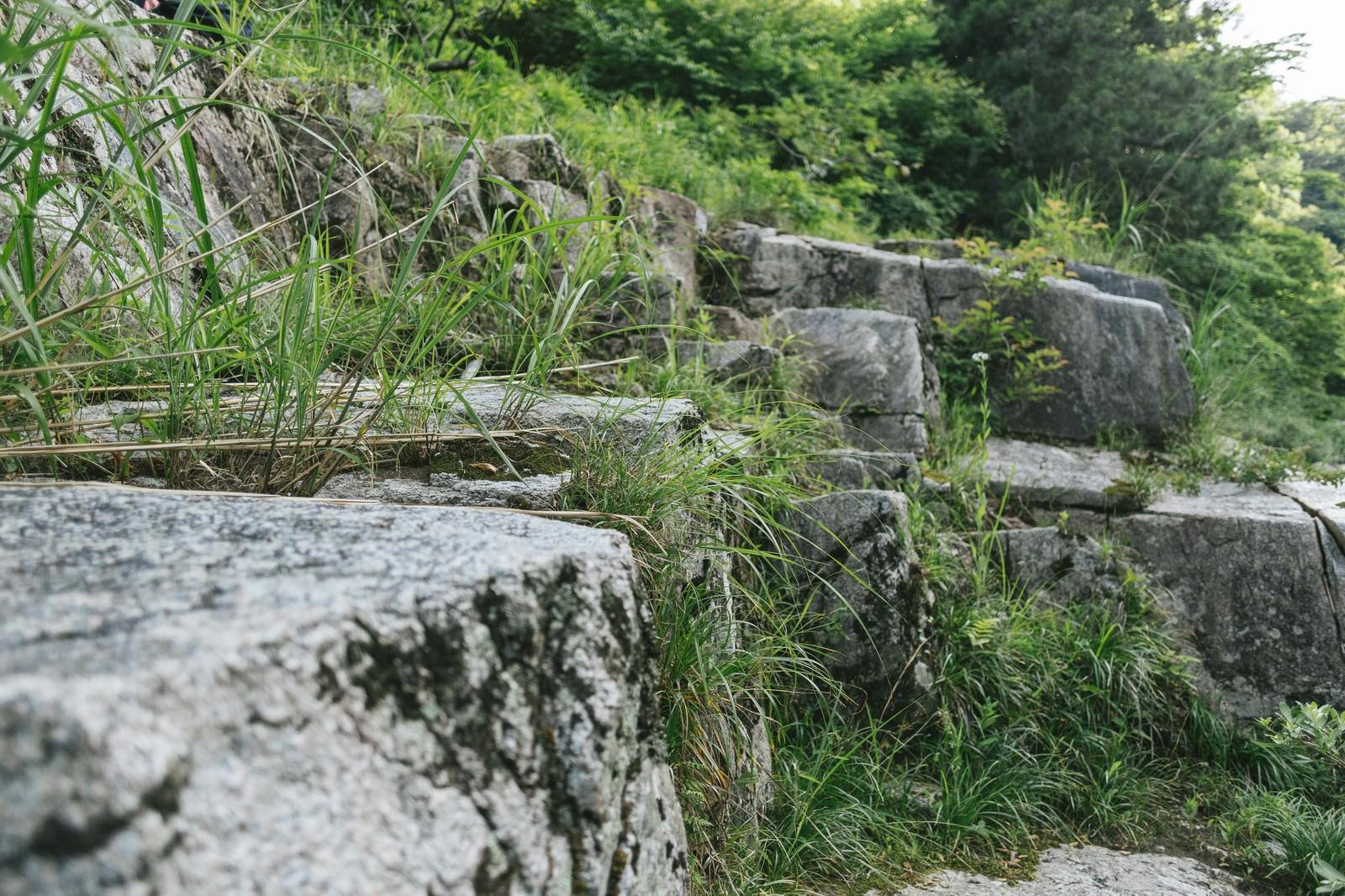 「岩と草(鏡野町奥津渓)」の写真