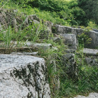 「岩と草(鏡野町奥津渓)」の写真素材
