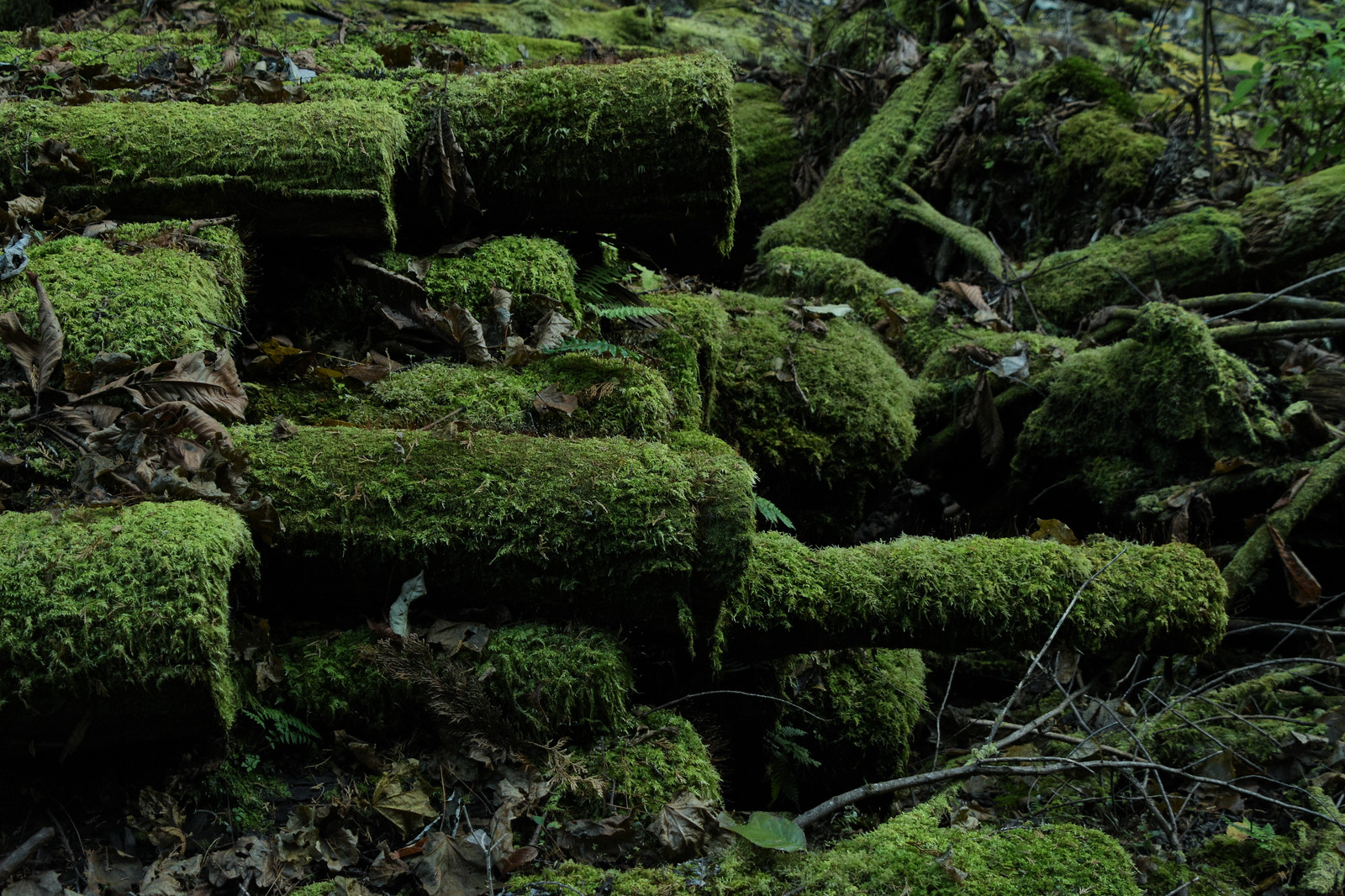 「積み上げられた苔生す木材」の写真