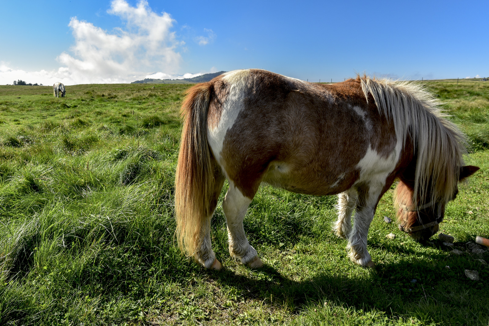 「美ヶ原の景色と放牧されているポニー」の写真
