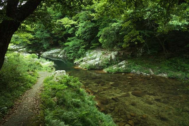 新緑の奥津渓も美しいの写真