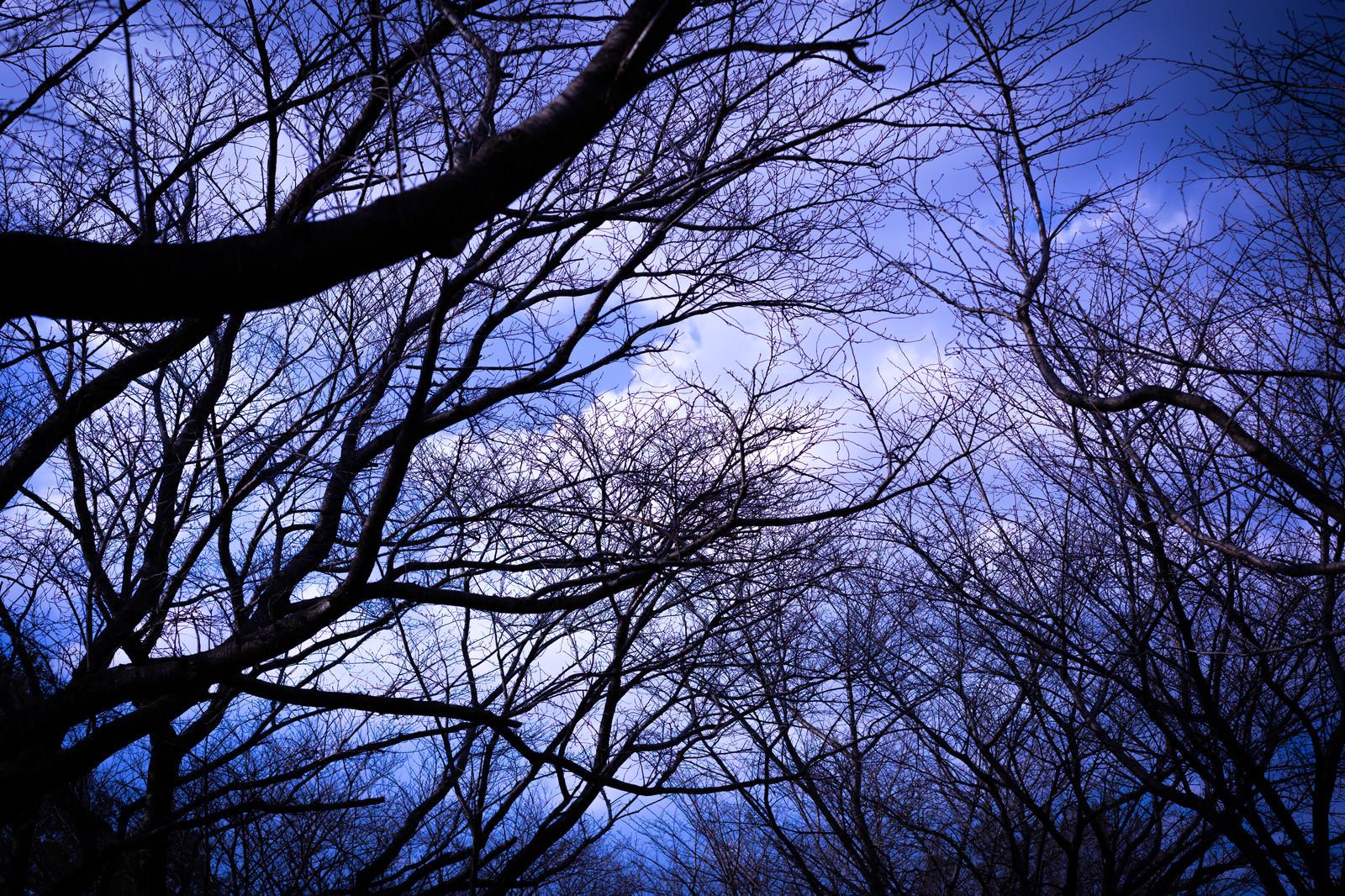 「不気味な空に伸びる木々」の写真