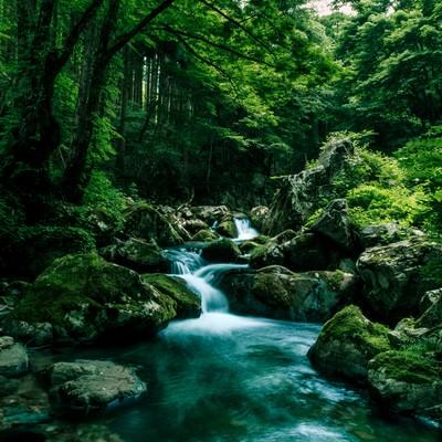 「深い森の中を流れる白賀渓谷」の写真素材