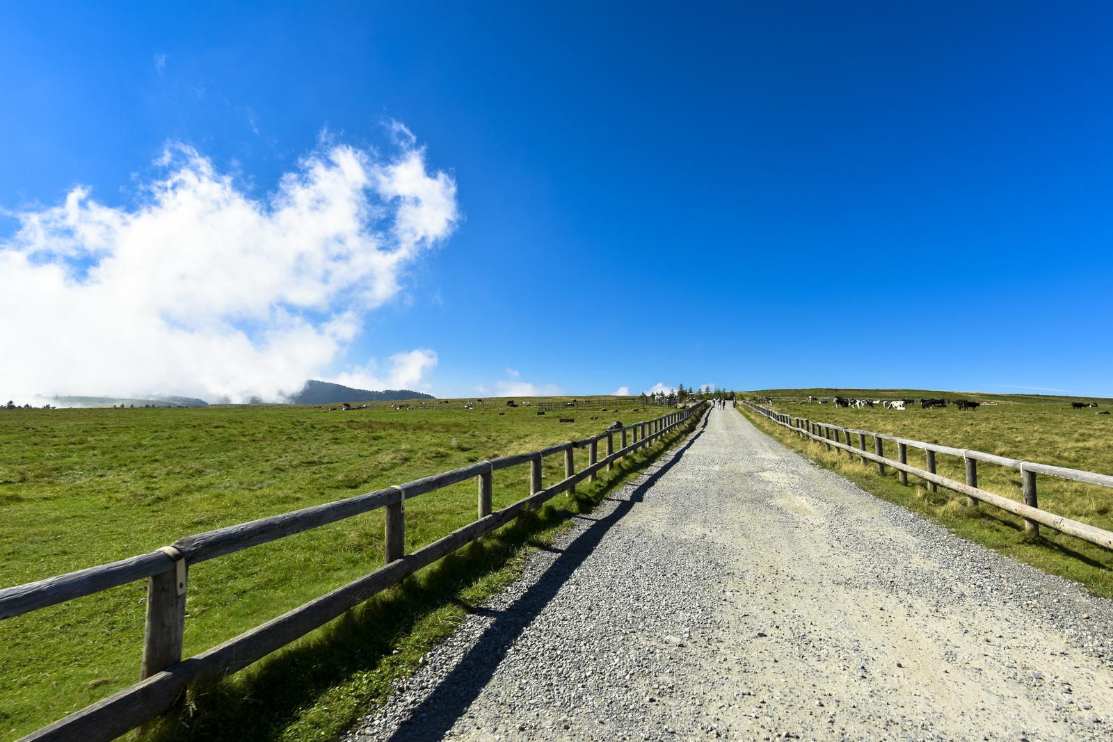 「美ヶ原を横切る牧場の柵」の写真