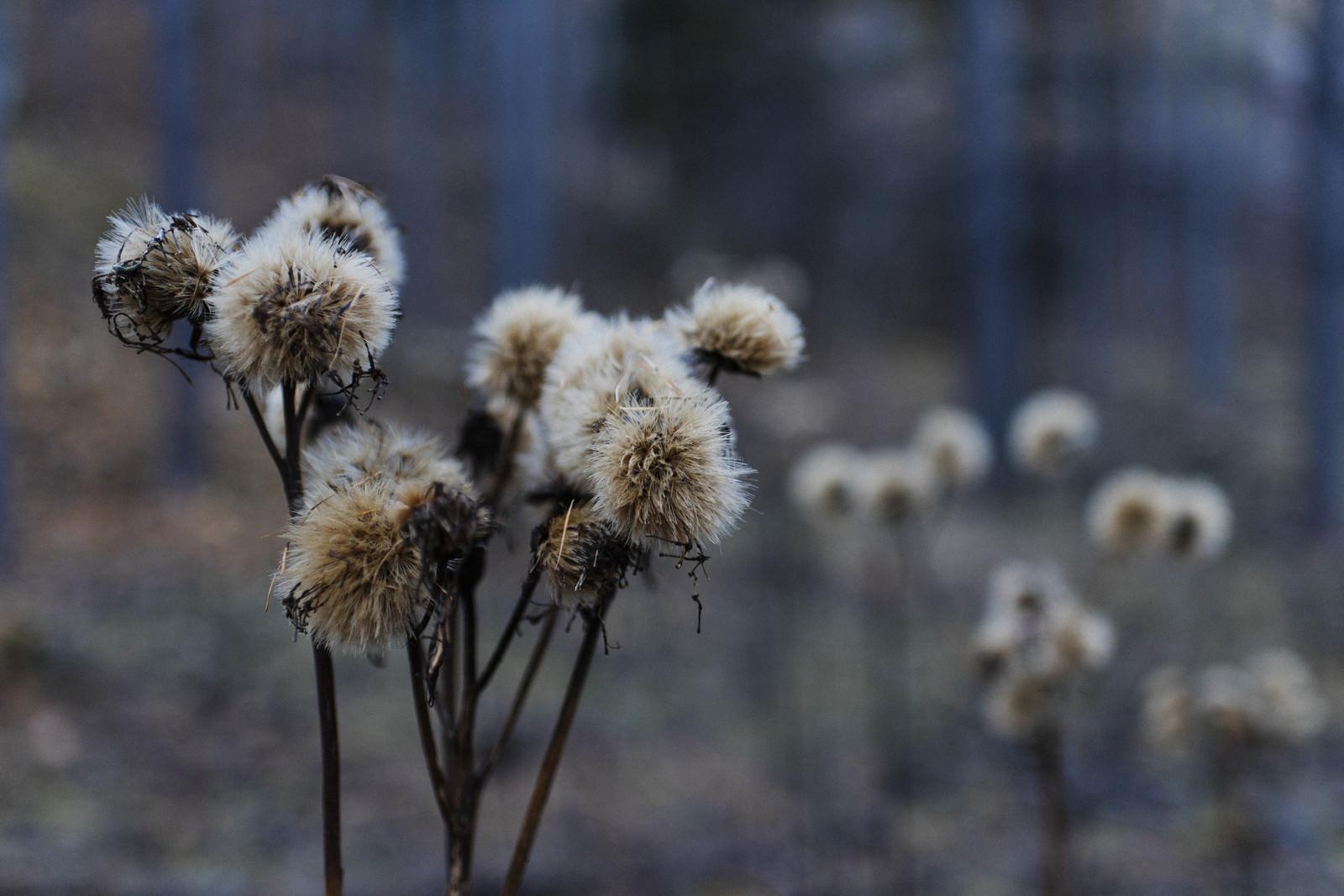 「登山口に咲く冬を待つ花(甲武信ヶ岳)」の写真