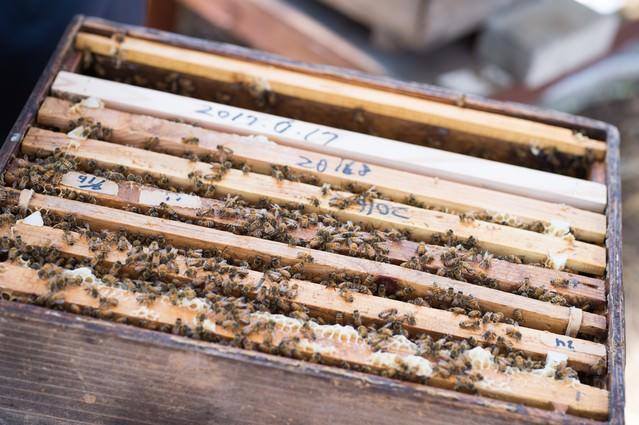 何層にもなった蜜蜂の巣箱の写真