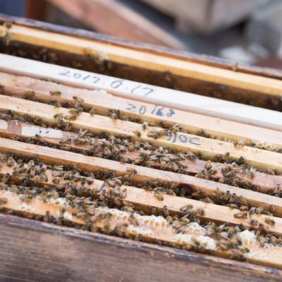 「何層にもなった蜜蜂の巣箱」の写真素材