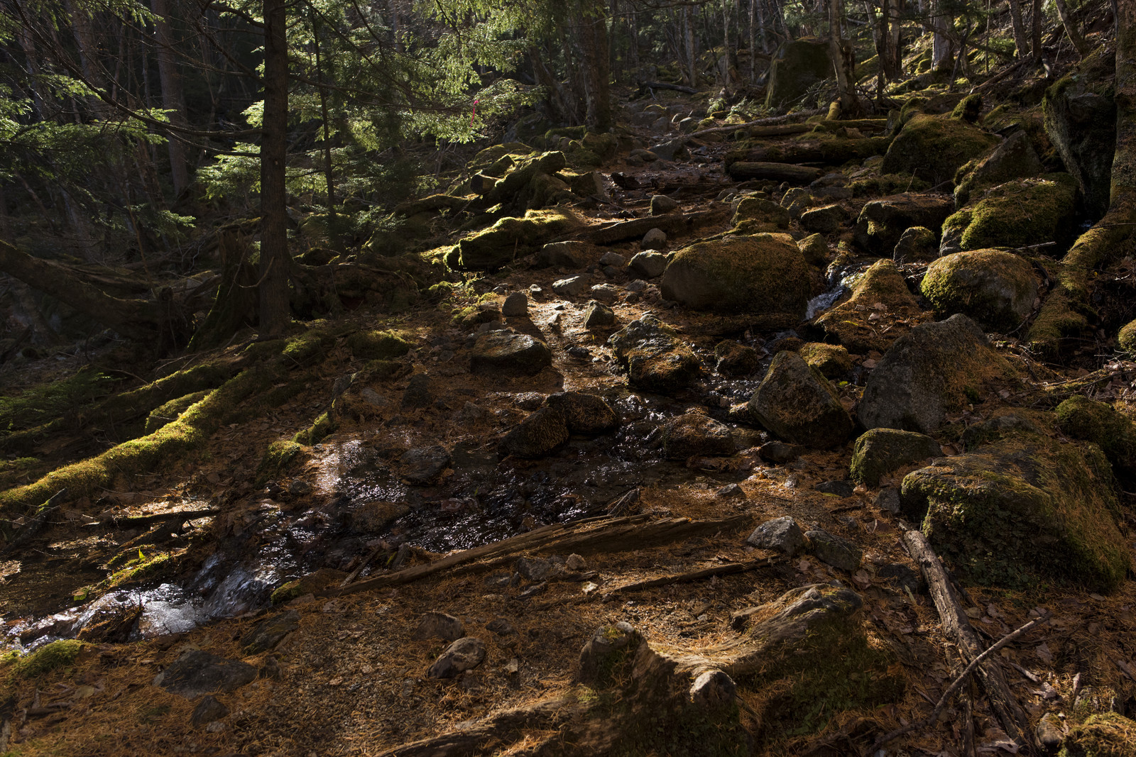 「落ち葉で金色に染まる甲武信ヶ岳の森」の写真