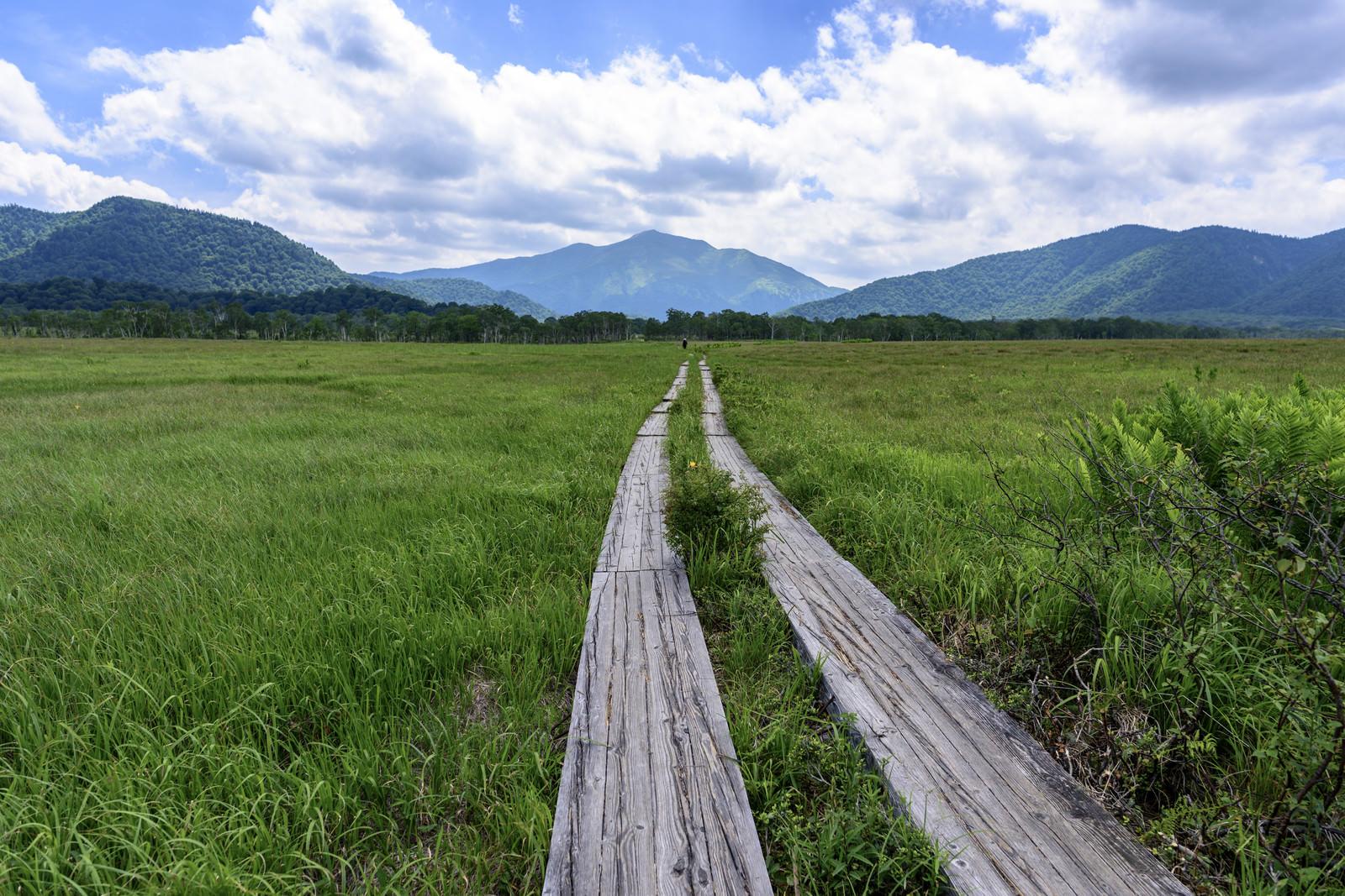 「まっすぐ伸びる尾瀬の木道と至仏山(しぶつさん)」の写真